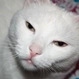 Наш любимец кот Масяня. Nikon D3000 Kit 18-55 VR